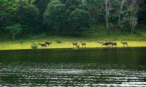 FAMOUS NATIONAL WILDLIFE PARKS IN INDIA