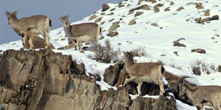 Hemis-national-park-India