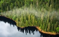 Do you know which the biggest forest in USA is?