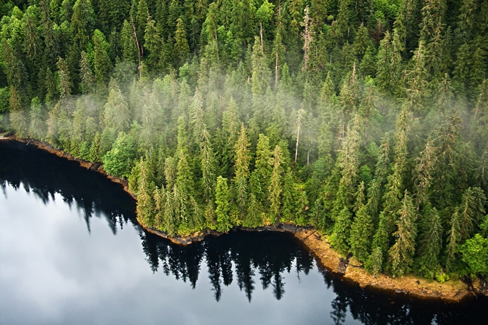 Do you know which the largest forest in USA is?