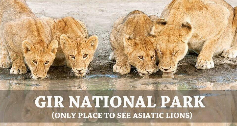 Best places to experience wildlife tourism in India