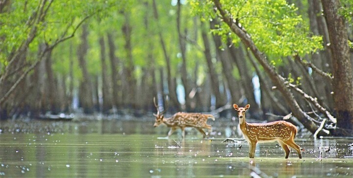 Best Wildlife Tour Packages in India
