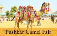 Guide to the immensely popular Pushkar camel fair 2018