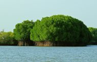 The Eye-Catching Pichavaram Mangrove Forest