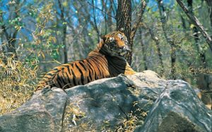 Wildlife Sanctuaries in India