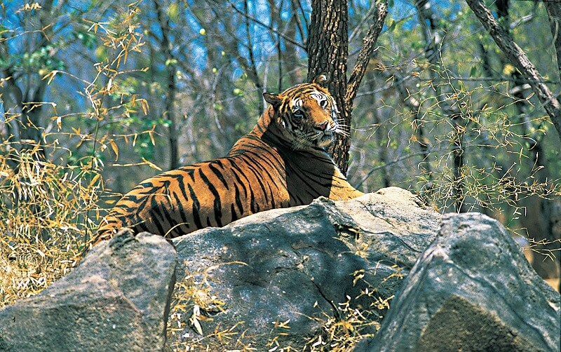 Top 5 Wildlife Sanctuaries in India and the Animals to Spot There!
