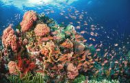 Wonders under the Sea: Facts about Tubbataha Reefs Natural Park