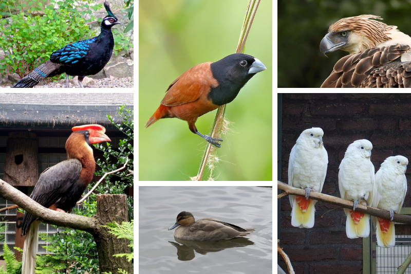 birds in philippines