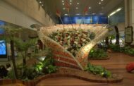 Changi Airport Gardens: An Oasis of Calm in an Airport Bustling with Activity!