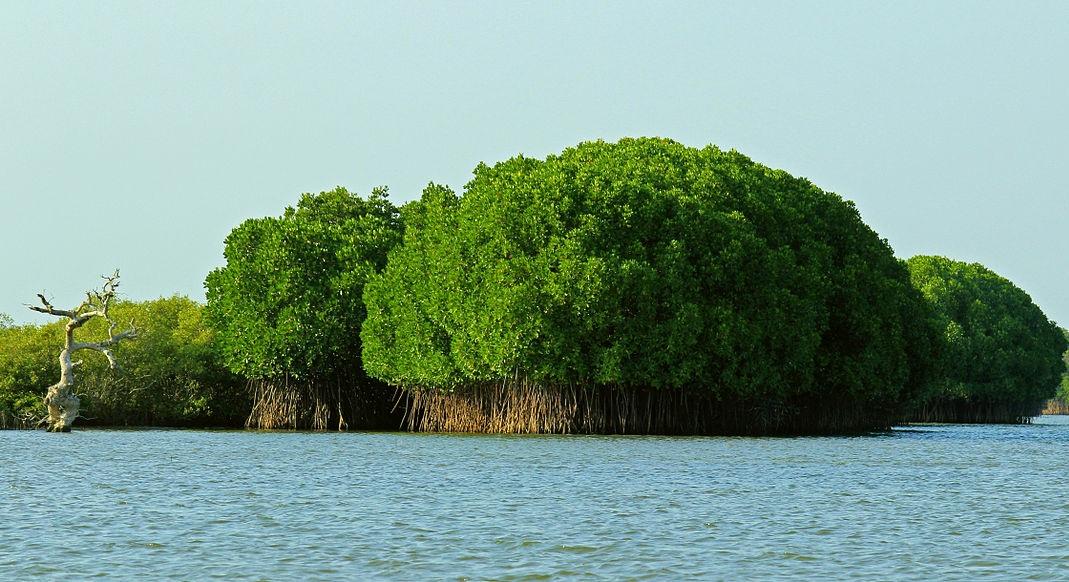The Eye-Catching Pichavaram Mangrove Forest