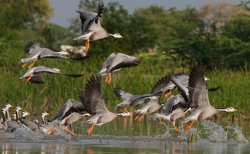 7 Lesser-known Bird Sanctuaries of India to Visit this Vacation